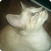 Adopt A Pet :: Stela - North Highlands, CA