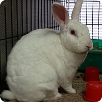 Adopt A Pet :: Strawberry - Williston, FL