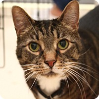 Adopt A Pet :: O'Malley - North Branford, CT