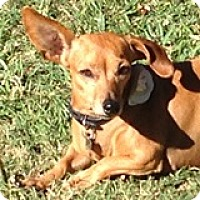Adopt A Pet :: Reba Rosebud - Houston, TX