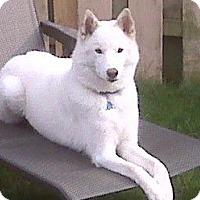 Adopt A Pet :: Snoe - Las Vegas, NV