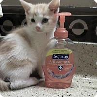 Adopt A Pet :: Parker - East Brunswick, NJ