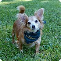 Adopt A Pet :: Puddin Pop - Mocksville, NC