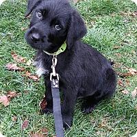 Adopt A Pet :: Zayne - New Oxford, PA