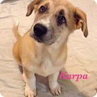 Adopt A Pet :: Karpa - Bartonsville, PA