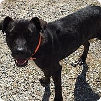 Adopt A Pet :: Jethro - Edisto Island, SC
