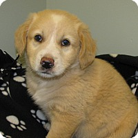 Adopt A Pet :: Donner - Groton, MA