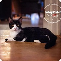 Adopt A Pet :: Slate - Westminster, MD