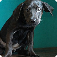 Adopt A Pet :: Hanna - Waldorf, MD