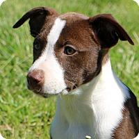 Adopt A Pet :: Penelope - Glastonbury, CT