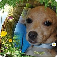 Adopt A Pet :: Tango - Crowley, LA