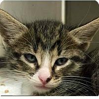 Adopt A Pet :: Jack - Springdale, AR