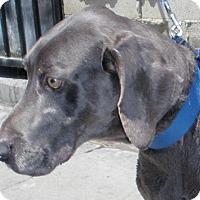 Adopt A Pet :: Shadow & Bella - Sun Valley, CA