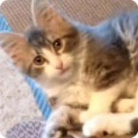 Adopt A Pet :: Roo - Ogallala, NE