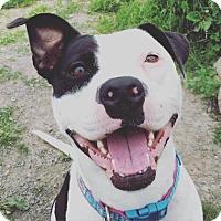 Adopt A Pet :: Daisy Mae - Ithaca, NY