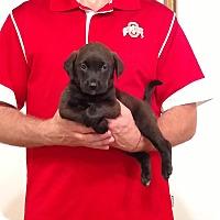Adopt A Pet :: Hunter - Gahanna, OH