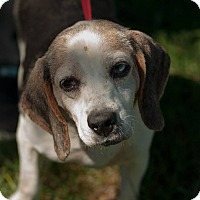 Adopt A Pet :: Sallie - Cincinnati, OH