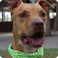 Adopt A Pet :: BUDDY - Phoenix, AZ