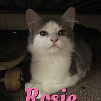 Adopt A Pet :: Rosie - Cheney, KS