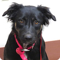 Labrador Retriever Mix Dog for adoption in Scottsdale, Arizona - Sadie