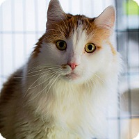 Adopt A Pet :: Puttie - Brooklyn, NY