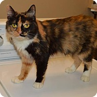 Adopt A Pet :: Consuela - Ashtabula, OH