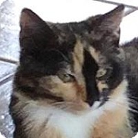 Adopt A Pet :: Nutmeg - Franklin, WV