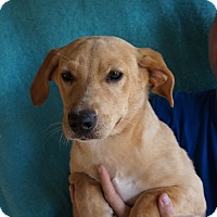 Adopt A Pet :: Phantom - Oviedo, FL