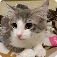 Adopt A Pet :: Boss - Parlier, CA
