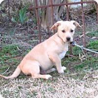 Adopt A Pet :: KIPP - Bedminster, NJ