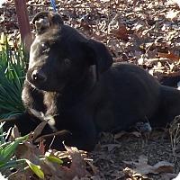 Adopt A Pet :: Handel - Bedminster, NJ