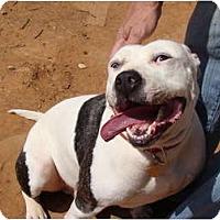 Adopt A Pet :: Duke - Blanchard, OK