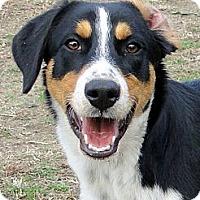Adopt A Pet :: Chase - Zebulon, NC