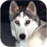 Adopt A Pet :: Bryton - Kettle Falls, WA