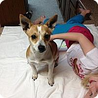 Adopt A Pet :: Tippie in San Antonio - San Antonio, TX