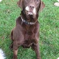 Adopt A Pet :: Larry - Brattleboro, VT