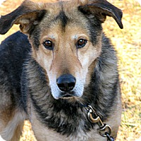 German Shepherd Dog Mix Dog for adoption in Indianapolis, Indiana - Henry