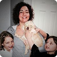 Adopt A Pet :: Waylon - Plain City, OH