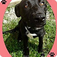 Adopt A Pet :: Tango - Benton, AR