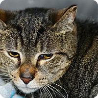 Adopt A Pet :: Toby - Suwanee, GA