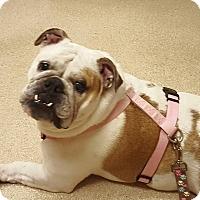 Adopt A Pet :: Lola - Park Ridge, IL