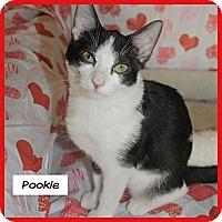 Adopt A Pet :: Pookie - Miami, FL