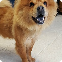 Adopt A Pet :: Luna - Fennville, MI