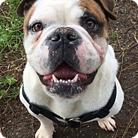 Adopt A Pet :: Tyson - Santa Ana, CA