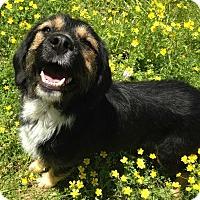 Adopt A Pet :: Camilla - E. Greenwhich, RI