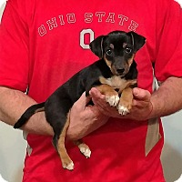 Adopt A Pet :: Andre - Gahanna, OH