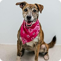 Adopt A Pet :: Smoochie - Brownsburg, IN