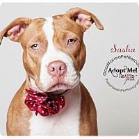 Adopt A Pet :: Sasha - Fort Lauderdale, FL
