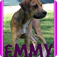 Adopt A Pet :: EMMY - Sebec, ME