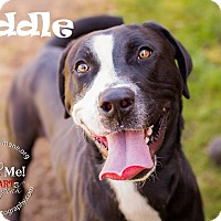 American Staffordshire Terrier Mix Dog for adoption in Ringwood, New Jersey - Riddle